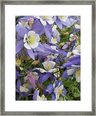Floral3 Framed Print by Cynthia Powell