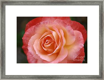 Framed Print featuring the photograph Florange by Stephen Mitchell