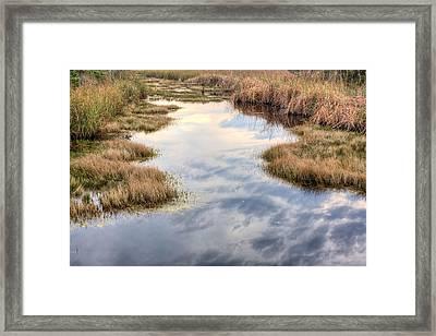 Flordia Wetlands Framed Print
