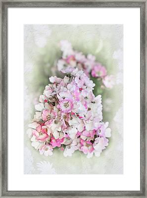 Florence Framed Print by Elaine Teague