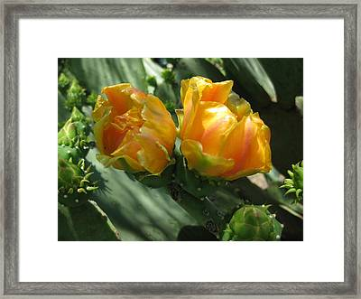 Flores De Cactus Framed Print by Diana Moya