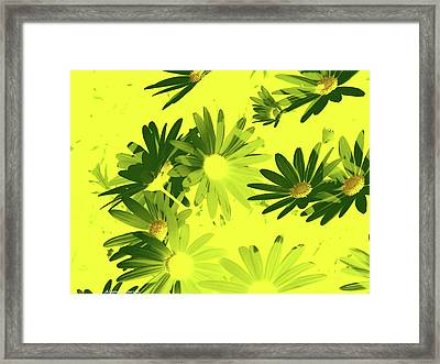 Framed Print featuring the photograph Flores De Primavera by Alfonso Garcia