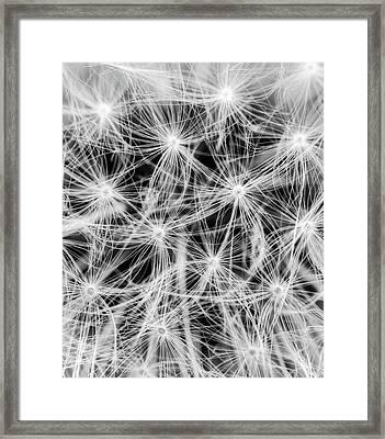 Florets Framed Print by Wim Lanclus