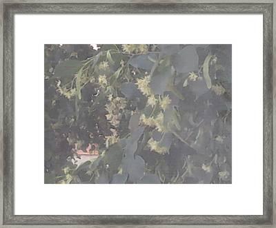 Flori De Tei Framed Print