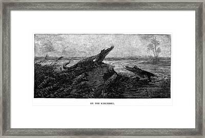 Florida Alligators, 1886 Framed Print by Granger