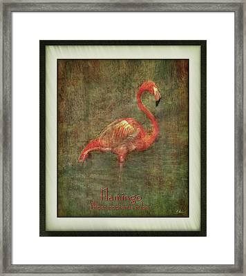 Framed Print featuring the photograph Florida Art by Hanny Heim