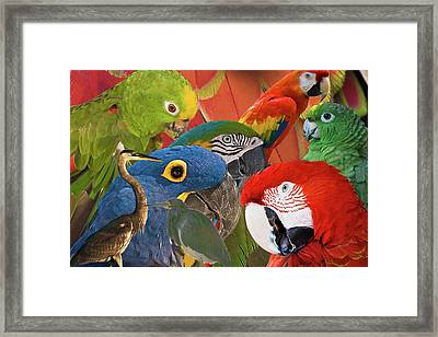 Florida Birds Framed Print