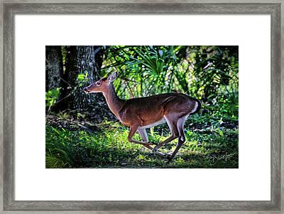 Florida Deer Framed Print