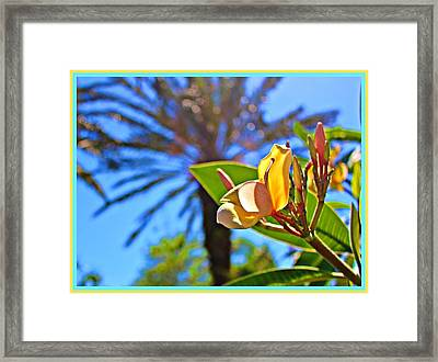 Florida Essence Framed Print by Mindy Newman