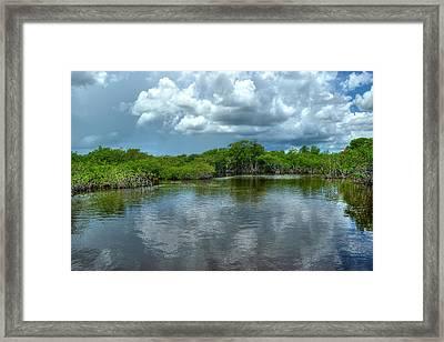 Florida Everglades Framed Print