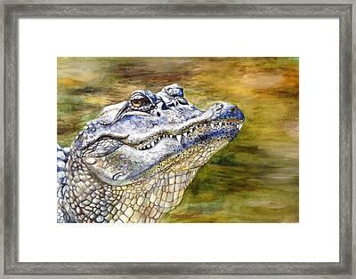 Florida Gator Framed Print by Alexandra Franzese