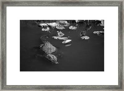 Framed Print featuring the photograph Florida Gator by Jason Moynihan