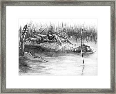 Florida Gator Framed Print by Murphy Elliott
