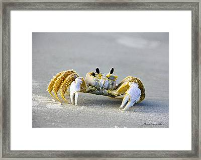 Florida Ghost Crab Framed Print by Kathy Ponce
