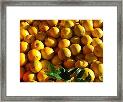 Florida Grapefruit Harvest Framed Print by David Lee Thompson