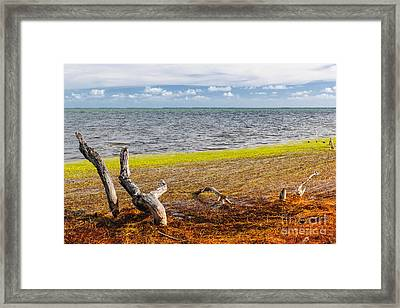 Florida Keys Colors Framed Print by Elena Elisseeva