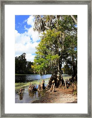 Florida Landscape - Lettuce Lake Framed Print by Carol Groenen