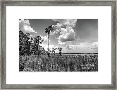 Florida Landscape Framed Print by Felix Lai