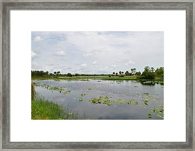 Florida Landscape Framed Print by Steven Scott