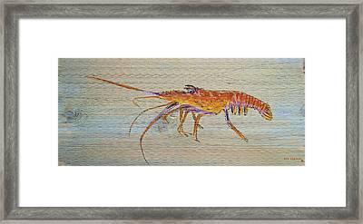 Florida Lobster Framed Print