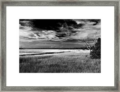 Florida Marsh Framed Print by Marcus Adkins