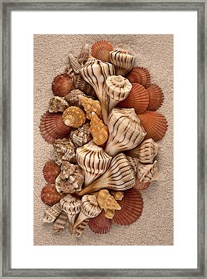 Florida Opus 09 Framed Print by Carol Zee