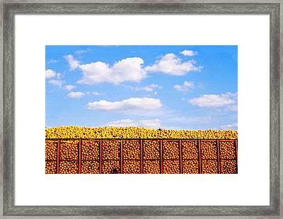Florida Orange Juice Framed Print by Justin  Dyal
