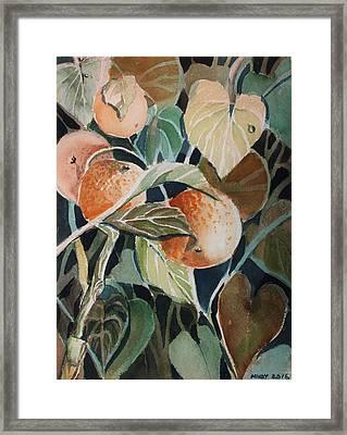 Florida Oranges Framed Print by Mindy Newman