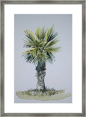 Florida Palm Botanical Framed Print