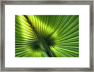 Florida Palm Frond Framed Print by Carolyn Marshall