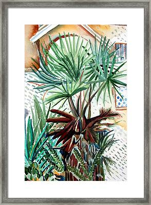 Florida Palm Framed Print by Mindy Newman
