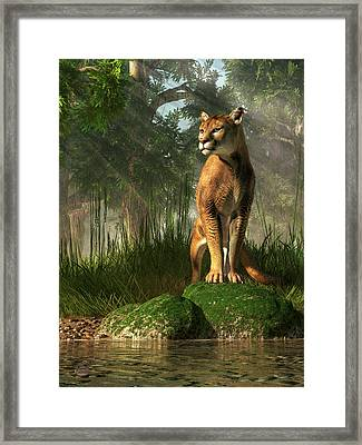 Florida Panther Framed Print by Daniel Eskridge