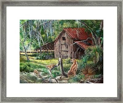 Florida Panther- The Fight For Survival Framed Print