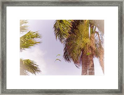 Florida Parrots Framed Print by Claudia M Photography