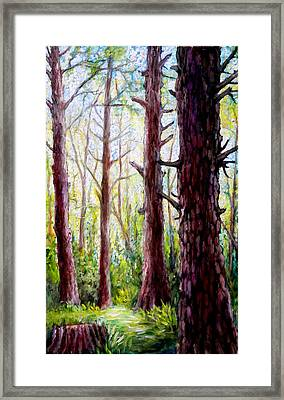 Florida Pine Forest Framed Print by Sebastian Pierre