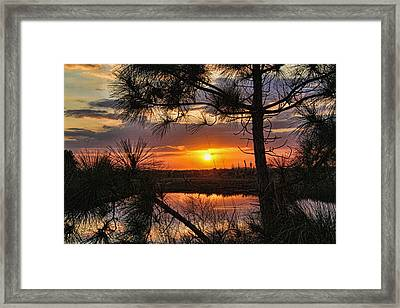 Florida Pine Sunset Framed Print by HH Photography of Florida