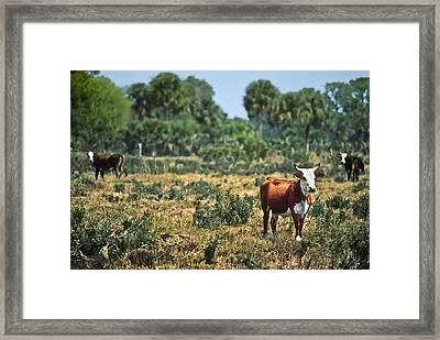 Florida Ranch Framed Print