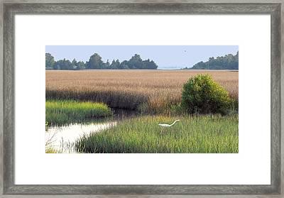 Framed Print featuring the photograph Florida Saltmarsh by Peg Urban