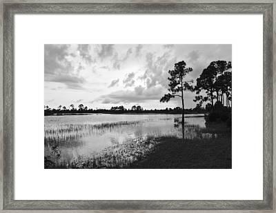 Florida Scene Framed Print by Steven Scott