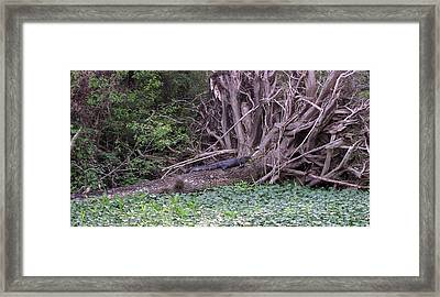 Florida Scenery Framed Print by Valia Bradshaw