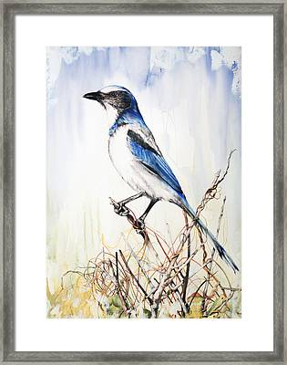 Florida Scrub Jay Framed Print by Anthony Burks Sr
