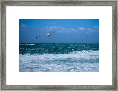 Framed Print featuring the photograph Florida Seagull In Flight by Jason Moynihan