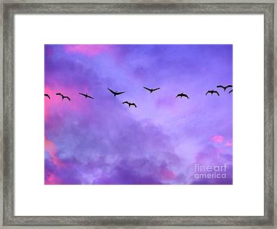 Florida Sky With Sandhill Cranes Framed Print by Judi Bagwell
