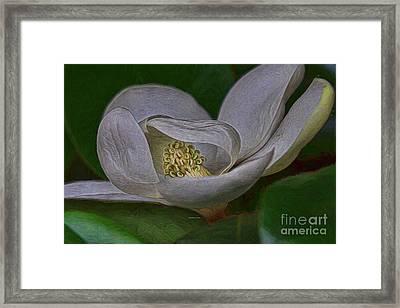 Florida Springtime Magnolia Framed Print by Deborah Benoit