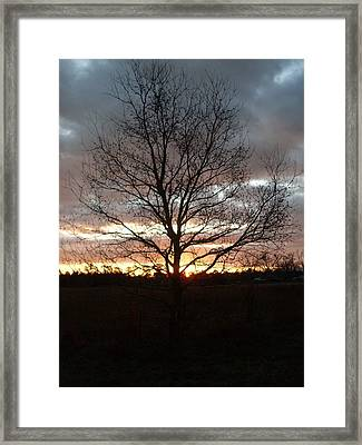 Florida Sunrise And Tree Framed Print by Warren Thompson