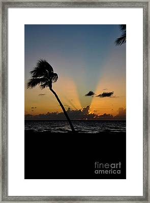 Framed Print featuring the photograph Florida Sunrise Palm by Kelly Wade