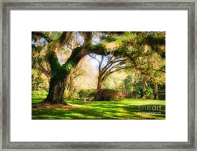 Framed Print featuring the photograph Florida Sunshine by Mel Steinhauer