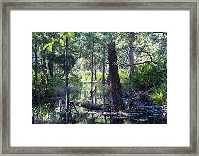 Florida Swamp Framed Print by Kenneth Albin