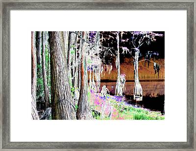 Florida Swamp Framed Print by Peter  McIntosh
