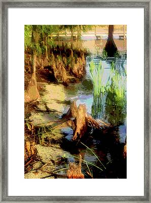Florida Swamplands Framed Print by Rianna Stackhouse